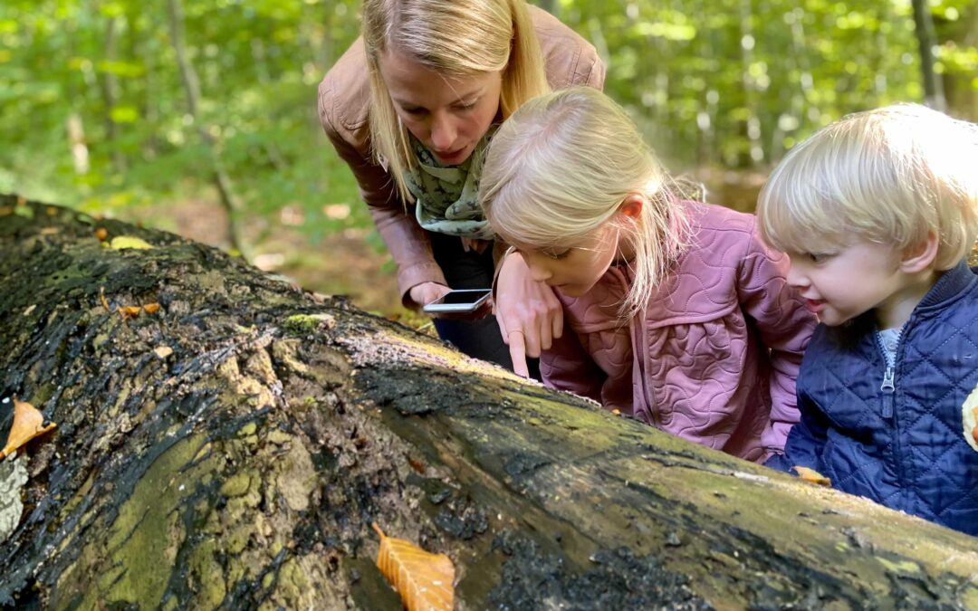 Nyt samarbejde skal gøre de yngste klogere på biodiversitet